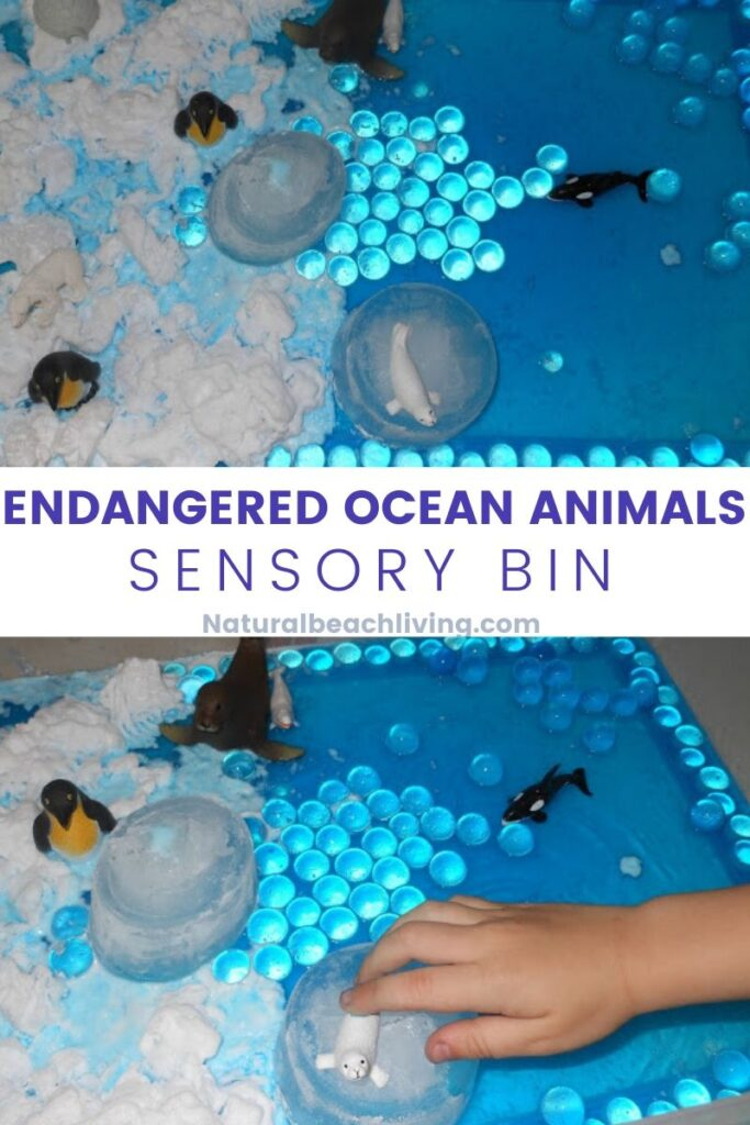 Endangered Ocean Animals Activities with Ocean Animals Sensory play, Ocean Theme Montessori Activity, Great ideas for Teaching the Ocean to kids and global warming, Ocean Science for kids and so much more