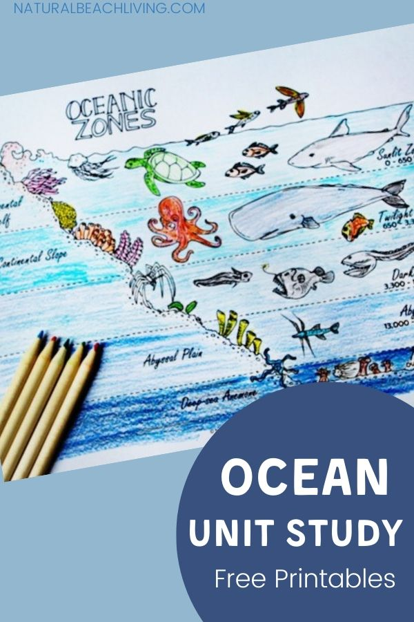 The Best Ocean Unit Study for Kids, Marine Biology for Kids and Under the Sea activities, Teach your kids about the ocean zones and Ocean life with these ocean theme activities. Plus, get free printable zones of the ocean worksheets to reinforce everything they learn!