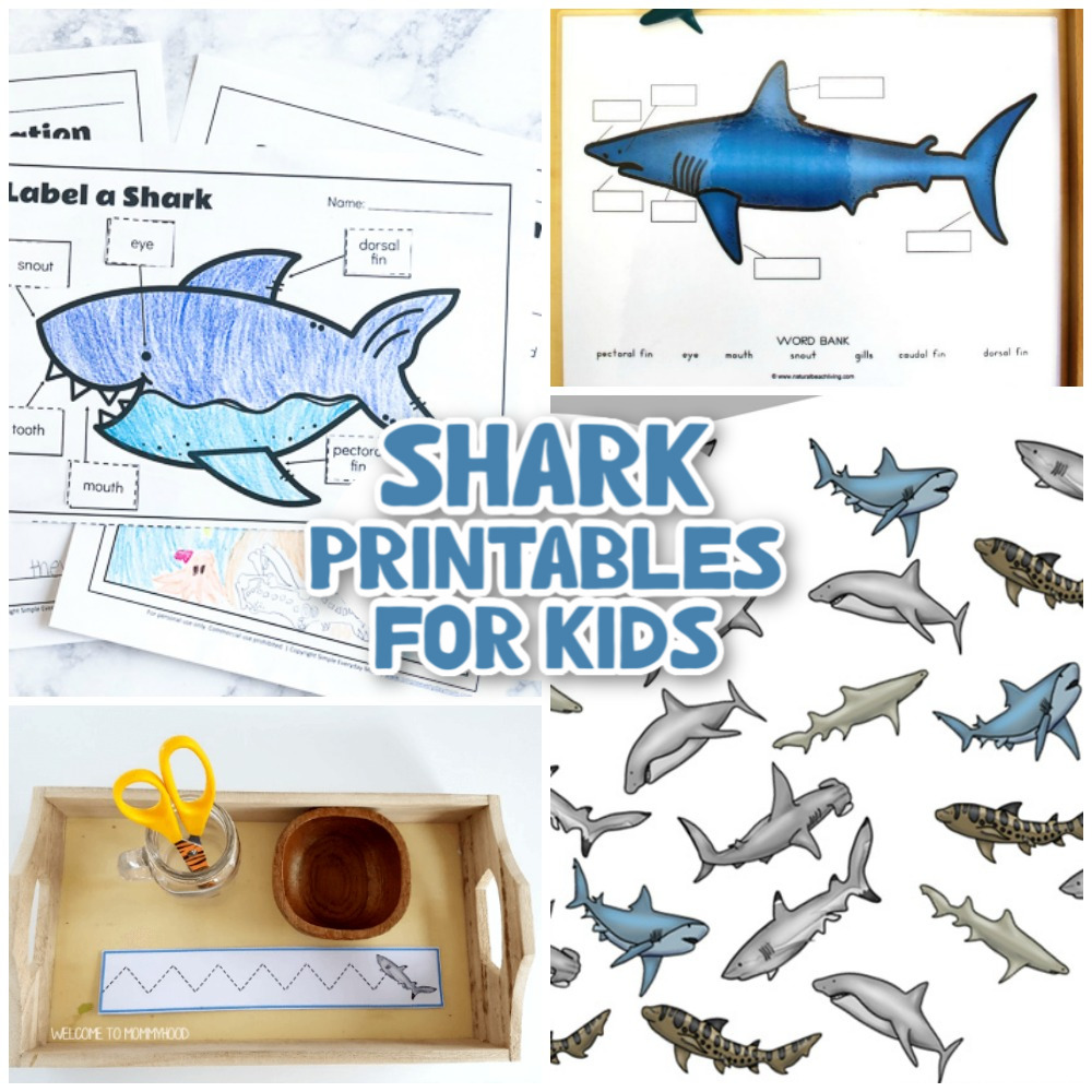 33+ Best Shark Printables, Templates, and Activities - Natural Beach Living
