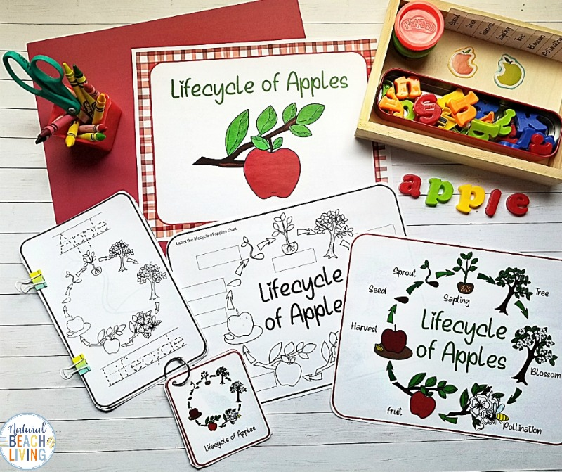 Children love these Apple Life Cycle Activities, Printables, and Lesson Plan Ideas for Fall and the Life Cycle of an Apple Tree Coloring pages are perfect for all ages. These Montessori inspired learning activities are perfect for exploring apples and life cycles with your kids this season. Includes Apple Science, Art, field trips, Math, Literacy, Fall Books for Kids and more.