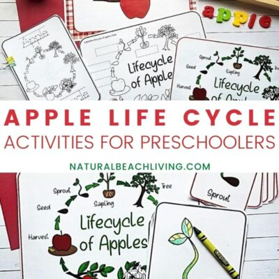Apple Life Cycle Activities, Printables, and Lesson Plan Ideas for Fall