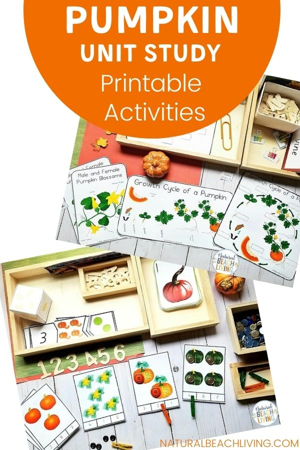 Montessori and Charlotte Mason Pumpkin Activities for Preschool and Kindergarten, Add this All About Pumpkin Unit Study to your Montessori Activities this fall to bring hands on learning to the season. As well as strengthen literacy, fine motor skills, number recognition, math skills, Science Activities, and so much more.