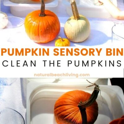 The Best Montessori Pumpkin Washing Station – Pumpkin Sensory Bin for Toddlers
