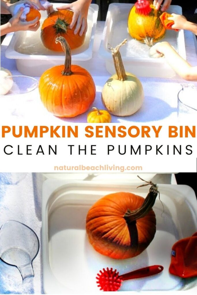 Set up a Montessori Practical Life Pumpkin Washing Station for kids, A quick and easy fall activity with pumpkins that makes the perfect fall sensory bin washing table, fall life skills activity, Montessori Fall Activities or add this to a pumpkin theme for preschool