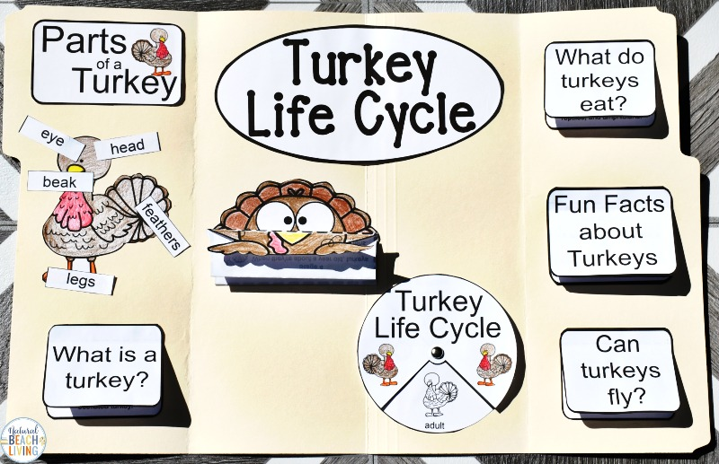 Engage your class or homeschoolers with an exciting hands-on experience learning all about turkeys! These Turkey Life Cycle Activities is a Life Cycle Lapbook Interactive Activity is perfect for science in Preschool, Kindergarten, First Grade, and Second Grade and it's packed full of fun science activities. learn about turkeys, parts of a turkey, and a turkey's life cycle. The Life Cycle of a Turkey Worksheets & Teaching Resources