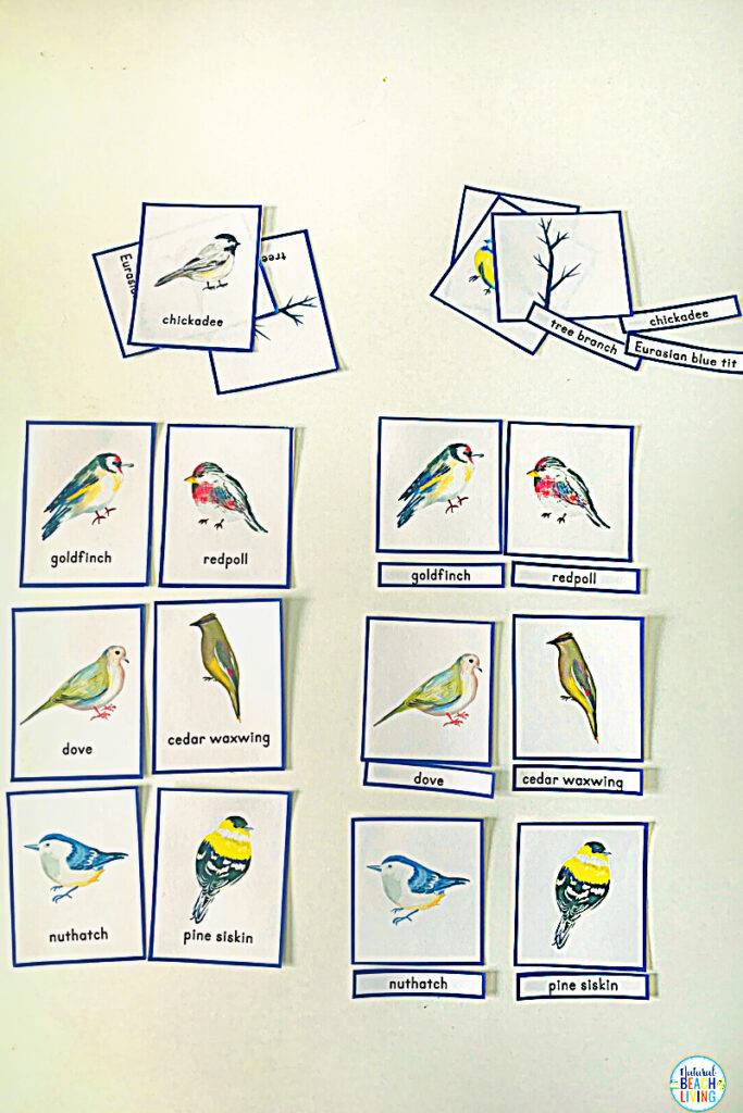 These bird activities are sure to keep the kids having fun this winter. There are so many printables and activities for a bird unit! Montessori Winter Bird Activities and Bird Theme for Preschool and Kindergarten that include Math, crafts, literacy, fine motor, science, movement activities, writing prompts, and so much more.
