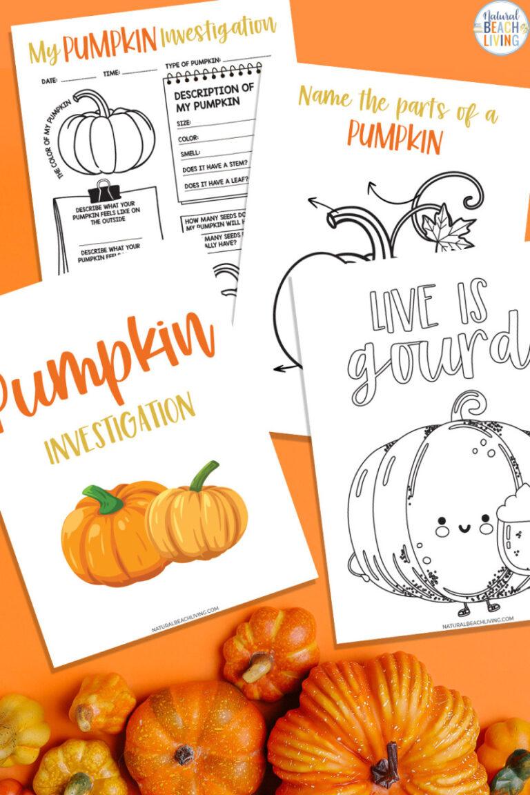 Pumpkin Investigation Worksheets and Activity